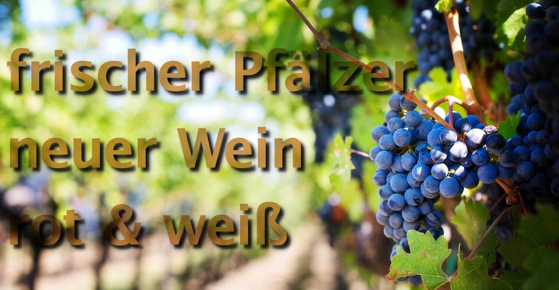 neuer Wein aus der Pfalz